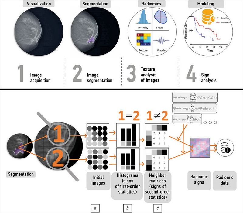 The role of mammography in breast cancer radiomics